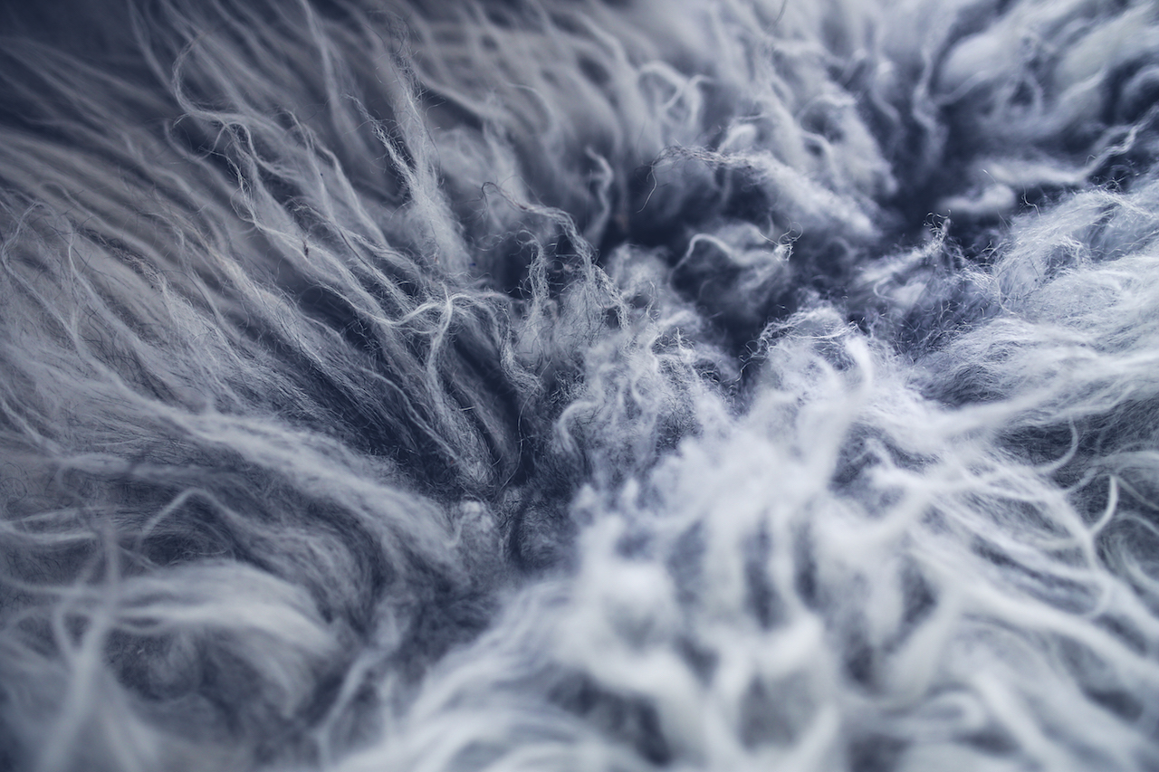 kaboompics.com_Gray fur